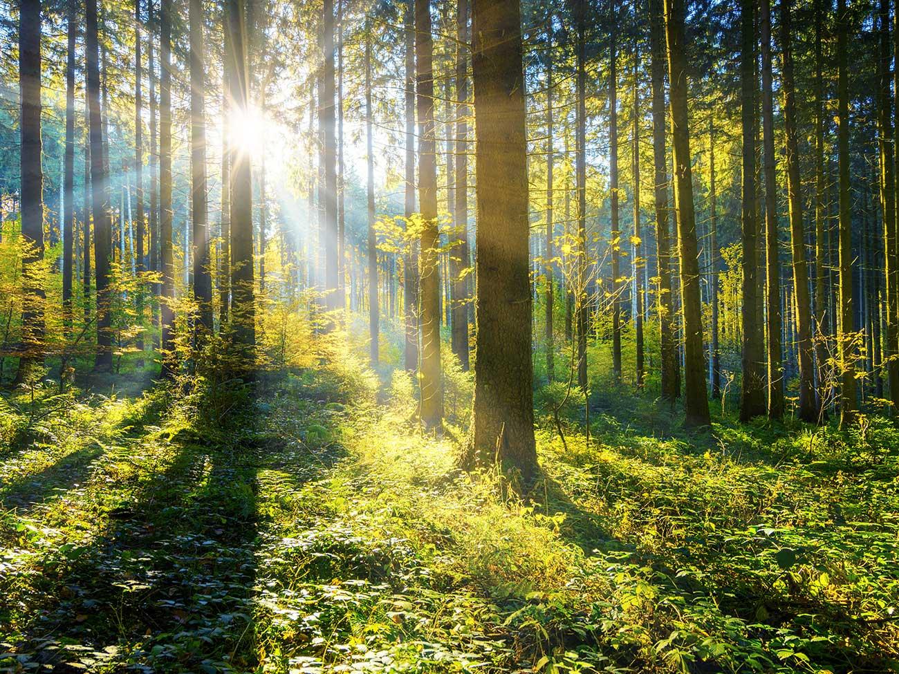 Gründer Wald mit Sonnenlicht